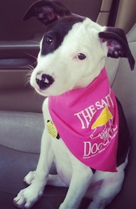 Black and white dog in a pink bandana